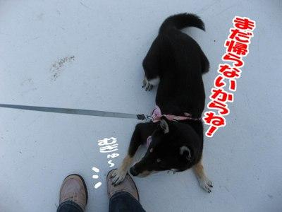 Photo_5