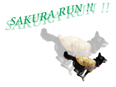 Sakura_run_2