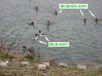 Photo_252