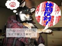 Photo_282