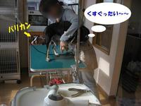 Photo_290