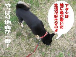 Photo_295