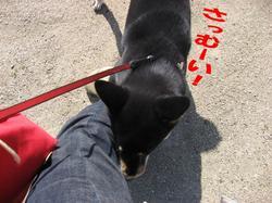 Photo_309