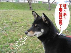 Photo_396