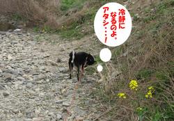 Photo_411