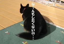 Photo_442
