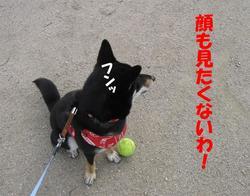 Photo_449