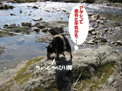 Photo_487