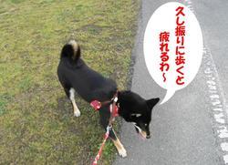 Photo_503