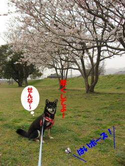 Photo_520