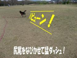 Photo_525