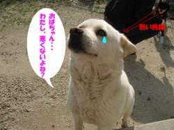 Photo_555