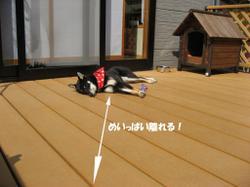 Photo_568