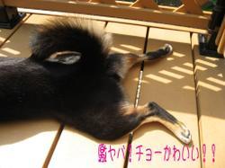 Photo_591