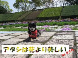 Photo_593