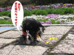 Photo_594