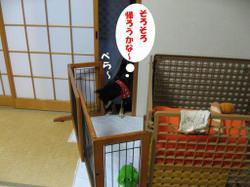 Photo_596