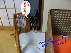 Photo_598