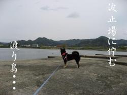 Photo_605
