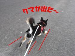 Photo_615