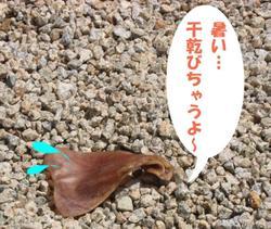 Photo_628