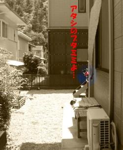 Photo_631