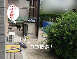Photo_650