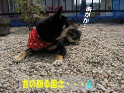 Photo_653