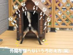 Photo_659