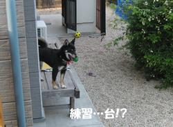 Photo_671