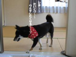 Photo_699