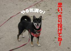 Photo_702