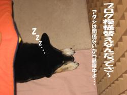 Photo_739