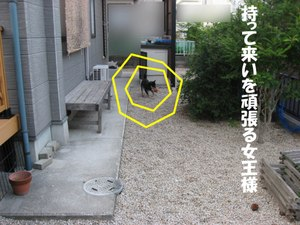 Photo_766
