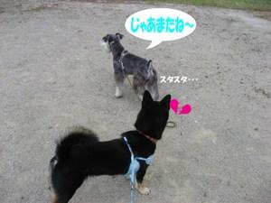 Photo_813