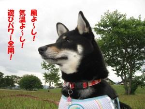 Photo_817