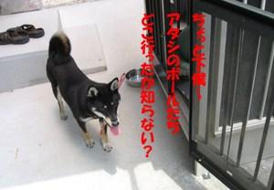 Photo_827