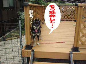 Photo_856