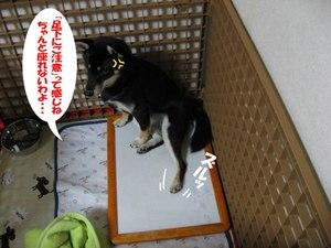 Photo_871