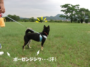 Photo_888