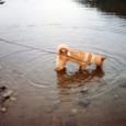 川は大好き
