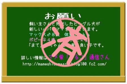 マメ柴「まるこ」通信